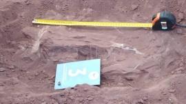 Hallaron restos de un dinosaurio hervíboro en Vaca Muerta