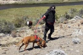 Intensa búsqueda de un hombre con esquizofrenia en Perito Moreno