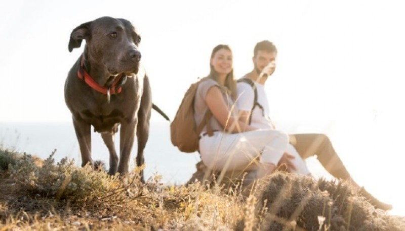 Los perros también pueden ser buenos compañeros de viaje