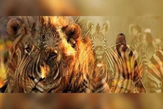 Un león, una cebra o un pájaro, lo que veas primero dice mucho sobre tu personalidad