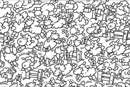 Reto Viral: un pollito se esconde entre las ovejas