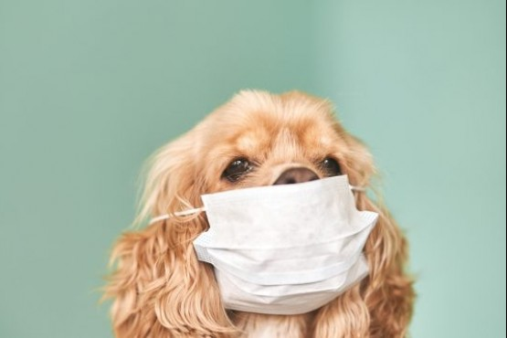 Hasta el momento son 21 países que llevan reportando o detectando la presencia de la infección del Sars-CoV-2 en animales.