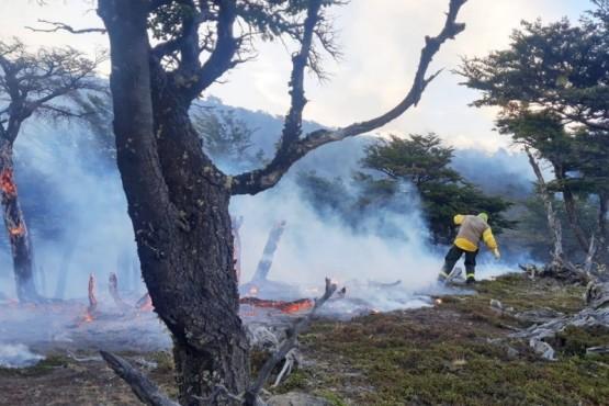 Incendio en el Parque Nacional Los Glaciares llega a un sector de bosque
