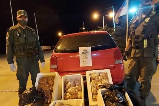 Decomisaron 40 kilos de langostinos y 40 kilos de anchoas