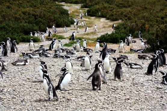 Horarios y requisitos para ir a la Laguna Azul y Cabo Vírgenes
