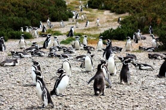 La Reserva Cabo Vírgenes se destaca por sus pingüinos de Magallanes