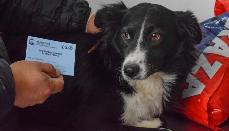 Río Gallegos  Programa de adopción de mascotas: Tirian fue recibido por su nueva familia