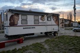Río Gallegos| Preocupación por posible suspensión de las castraciones en el Municipio