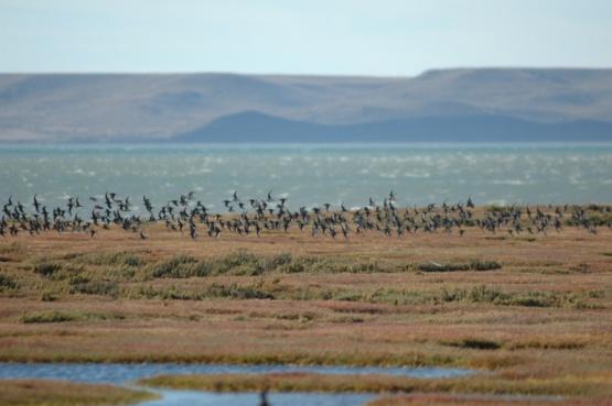 El Estuario del río Gallegos fue el primer humedal local en ser protegido, asegurando así sus inestimables servicios ambientales.