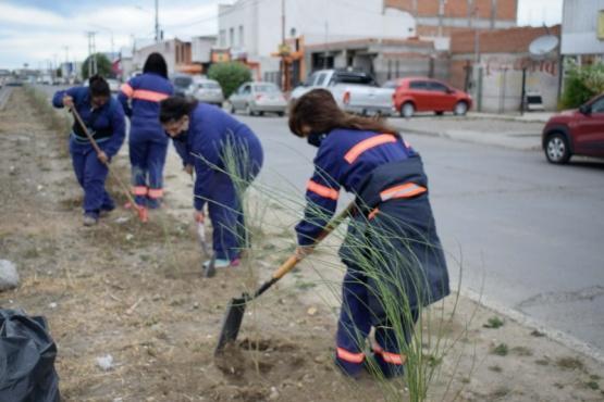 Municipio de Río Gallegos coloca más retamas en la Avenida Riquez