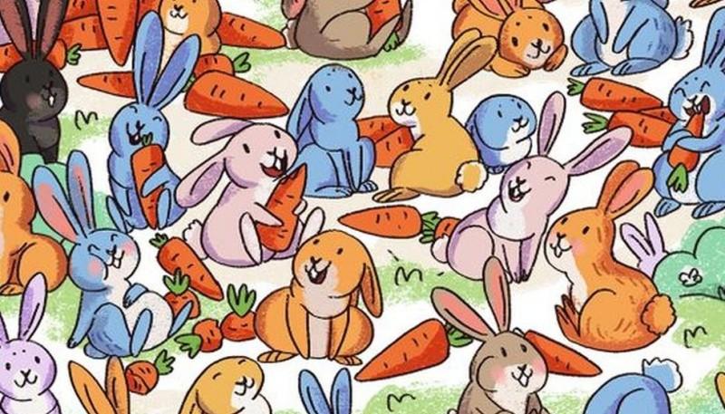 Reto viral: encontrá al conejo despistado que confundió a su zanahoria con un cono de tránsito