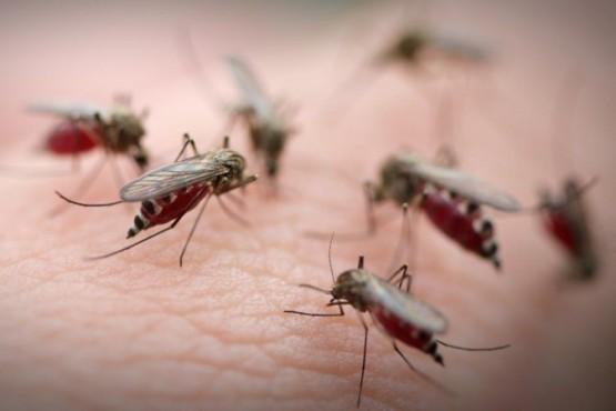 Una invasión de mosquitos azota a Buenos Aires: aclaran que no transmite Dengue