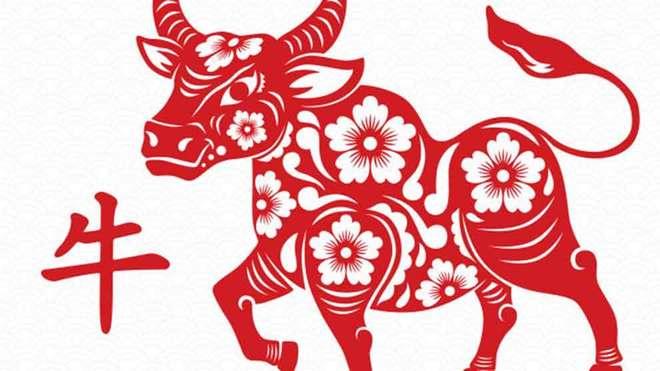Año del bufalo.