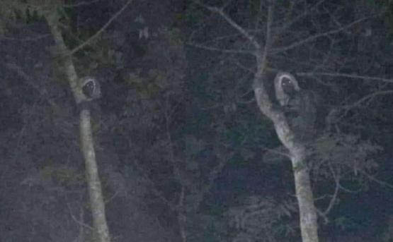 """Captaron la silueta  de una """"bruja"""" en un árbol"""