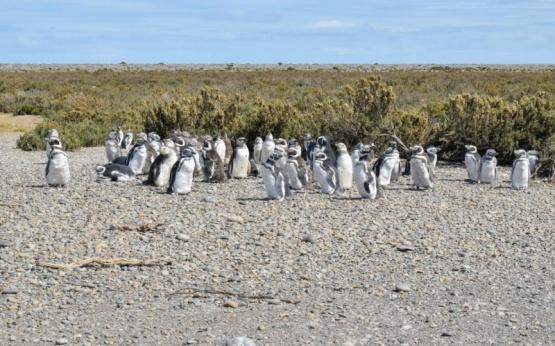 Otro fin de semana exitosos con viajes a la Pinguinera