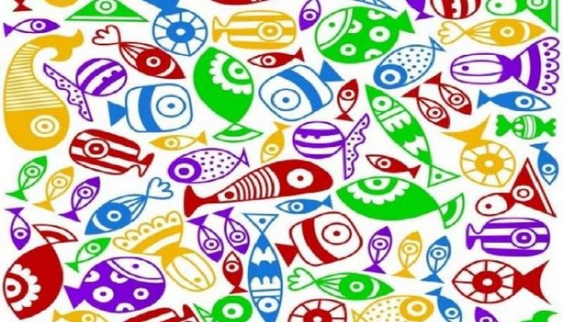 Reto viral: encontrar al caramelo camuflado entre los peces