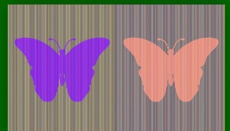 Reto viral: descubrí si el color de las mariposas es el mismo
