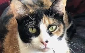 """""""Lilly"""", La gata que salvó a toda una familia al detectar un escape de gas en su hogar"""