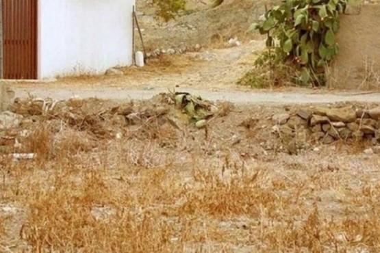Reto viral: un gato se camufló en el paisaje y nadie logró encontrarlo