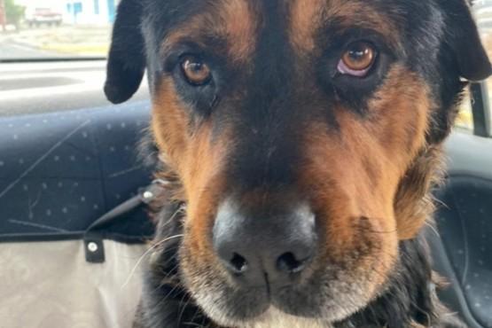 Tyson espera un hogar definitivo