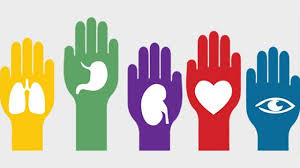 Día Internacional del Trasplante de Órganos y tejidos.