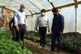 Fernando Cotillo realizó un nuevo recorrido por el Invernadero Municipal de Caleta Olivia