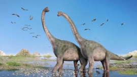 Encontraron embriones de un dinosaurio perfectamente conservados