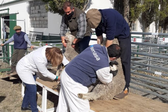 Se controlaron un total de 563 ovinos.