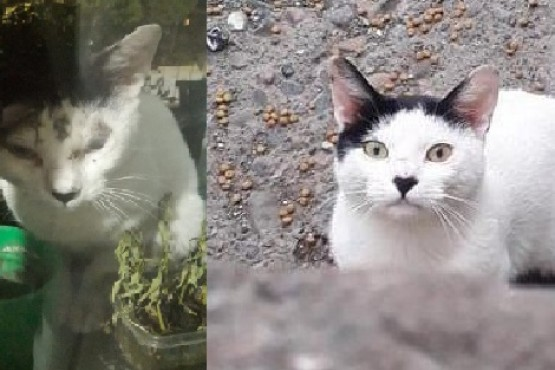 El antes y después de Louis, un gato adulto rescatado por Martina.
