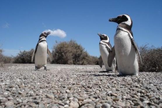 Días y horarios para visitar la Laguna Azul y la Pingüinera en Semana Santa