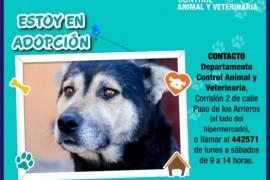 Adopción animal: La oportunidad de cambiar una vida