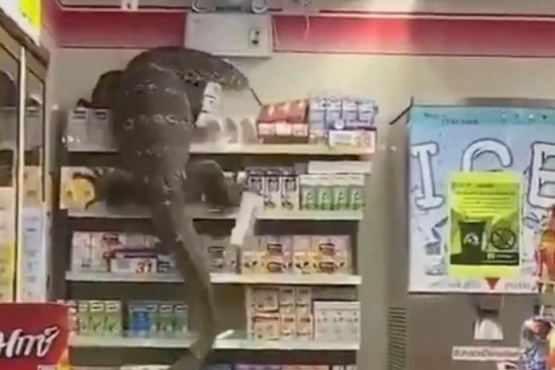 Filman a un lagarto gigante que trepó por un estante comercial en Tailandia