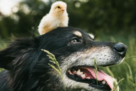 Pájaro o perro: lo que veas revelará tus secretos más íntimos