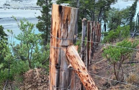 Actividades de restauración del bosque en Río Tigre y El Turbio