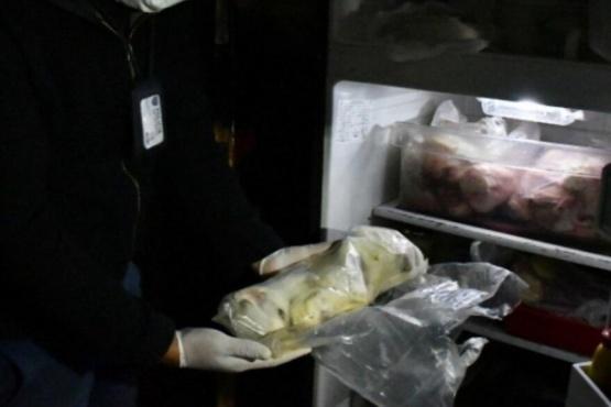 Horror en Villa Crespo: rescatan 17 felinos y hallan animales frezados en una heladera