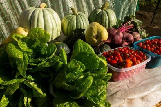 Se realizó la cuarta cosecha en el Invernadero de Caleta Olivia