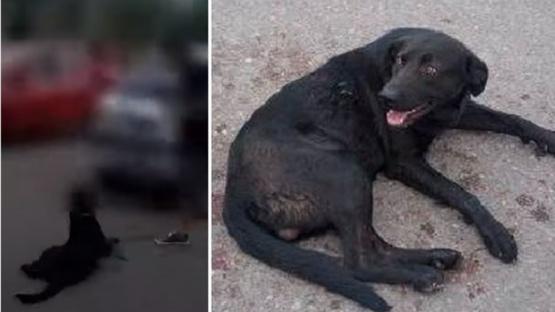 Condenada a pagar 1000 kilos de alimento por arrastrar con el auto a su perro