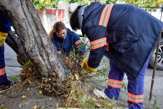 Trabajos de forestación en espacios públicos de Río Gallegos