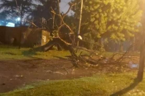 Un padre murió aplastado por un árbol al salvar a su hijo de 3 años