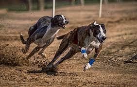 Las carreras de animales están prohibidas por ley.