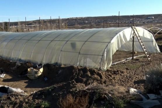 Avanzan los operativos de limpieza y un nuevo invernadero municipal en Caleta
