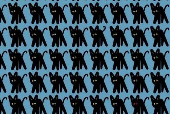 Evita la 'mala suerte': ¿cuáles son los gatos negros diferentes del reto viral?