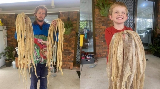 Un cazador de serpientes horrorizó las redes con este hallazgo