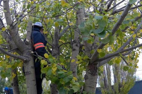 Este sábado las cuadrillas se abocaron a intervenir los árboles de la Avenida Kirchner de Río Gallegos