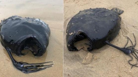 Paseaba por la playa y encontró una rara critatura marina
