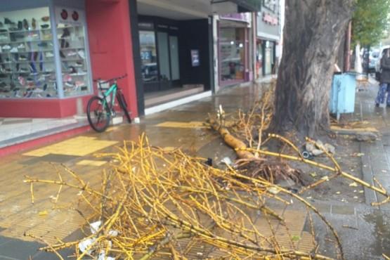 El árbol chocado (Foto: C.Robledo)