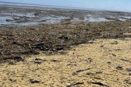 Toneladas de caviar cubrieron una playa en Rusia