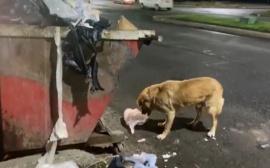 El video viral sobre el reciclaje y los perros en Río Gallegos