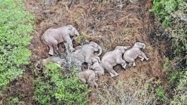 """La tierna foto de una manada de elefantes que hace """"siesta"""" durante el viaje"""