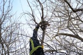 Con facturas agradecieron a los bomberos que rescataron a un gatito